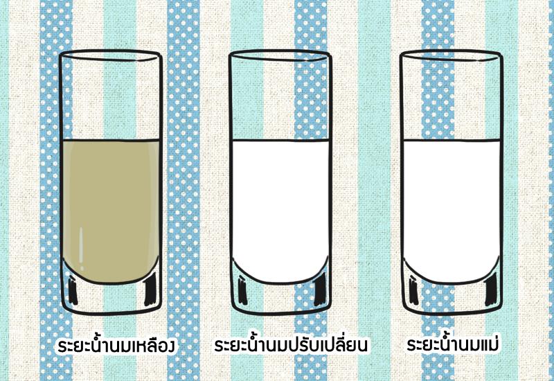ระยะของน้ำนมแม่
