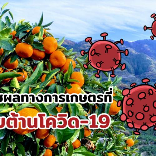 6 พืชผลทางการเกษตรที่ช่วยต้านโควิด-19
