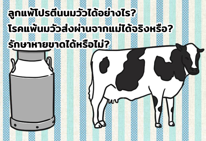 ลูกแพ้โปรตีนนมวัวได้อย่างไร? โรคแพ้นมวัวส่งผ่านจากแม่ได้จริงหรือ? รักษาหายขาดได้หรือไม่?